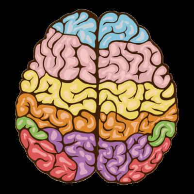 estimulacion-de-cerebro